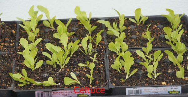 How to germinate vegetable seeds (Very detailed and useful)