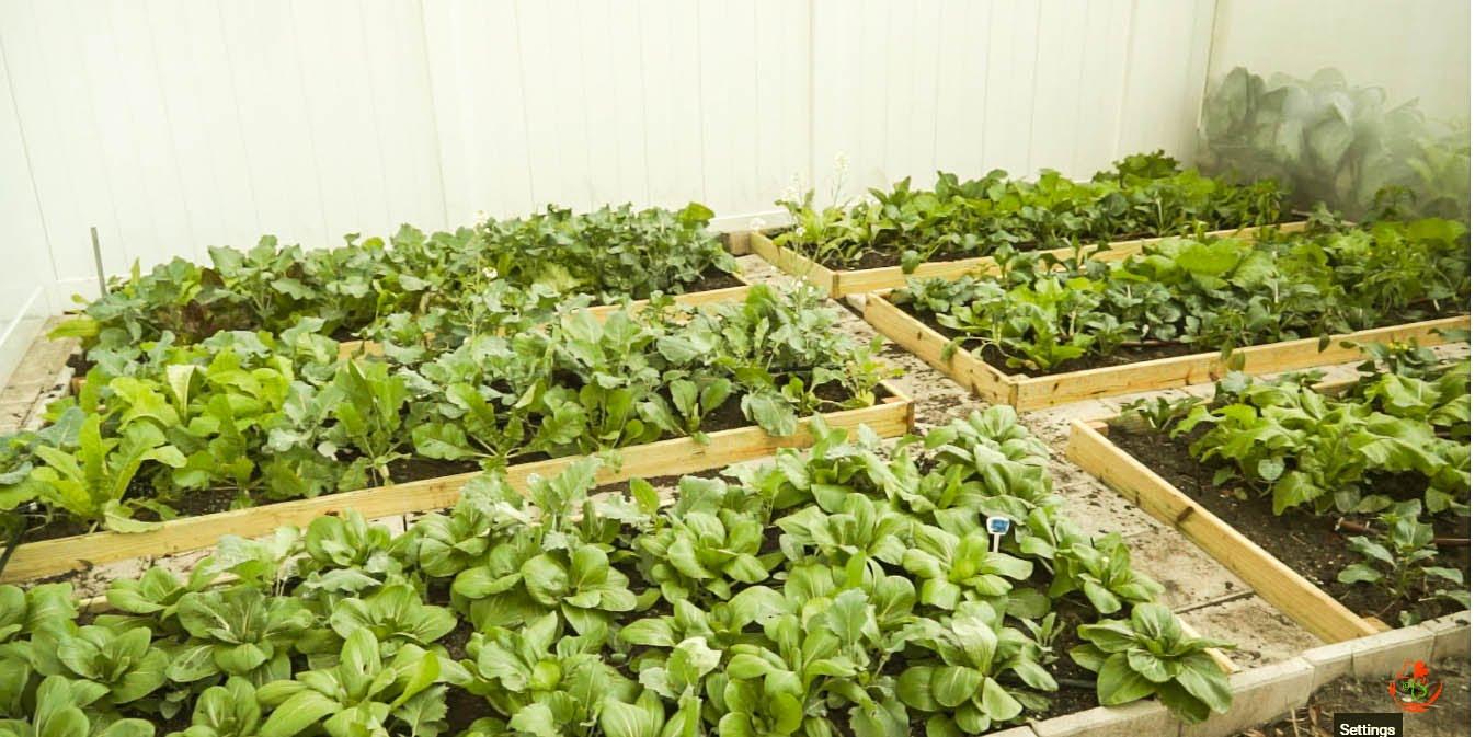 How To Start A Vegetable Garden 开垦新菜园